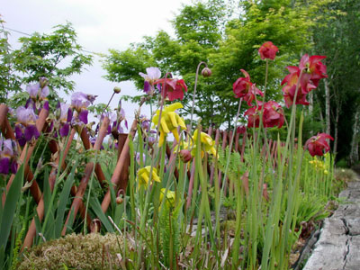 Le jardin carnivore peyrusse massas gers midi for Le jardin carnivore 32360 peyrusse massas